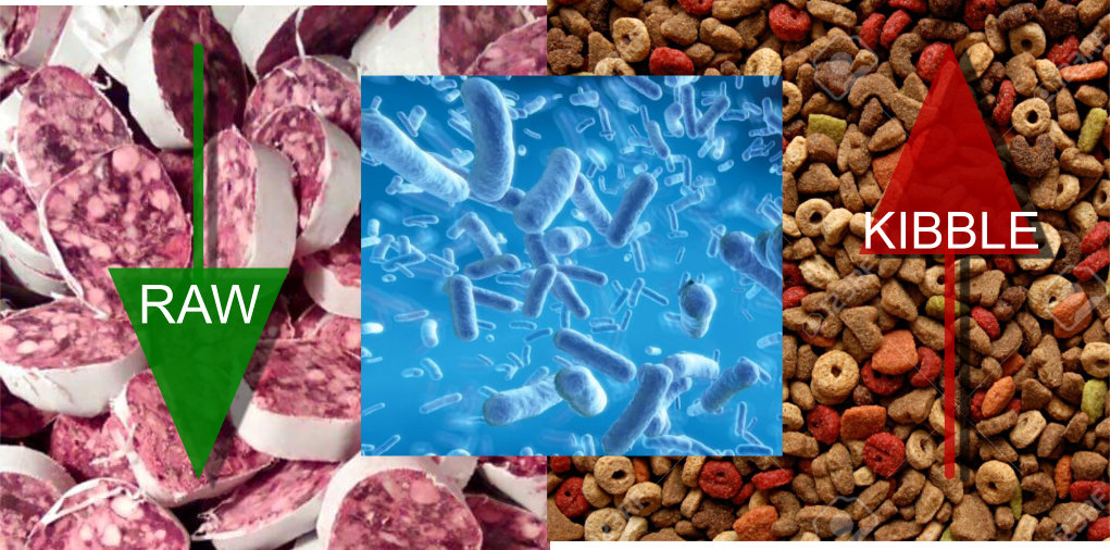 Raw meat based diet influences faecal microbiome and end products of fermentation in healthy dogs.
