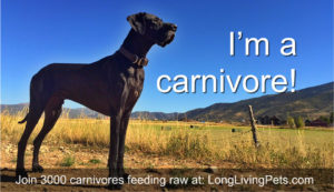 dogs are carnivores